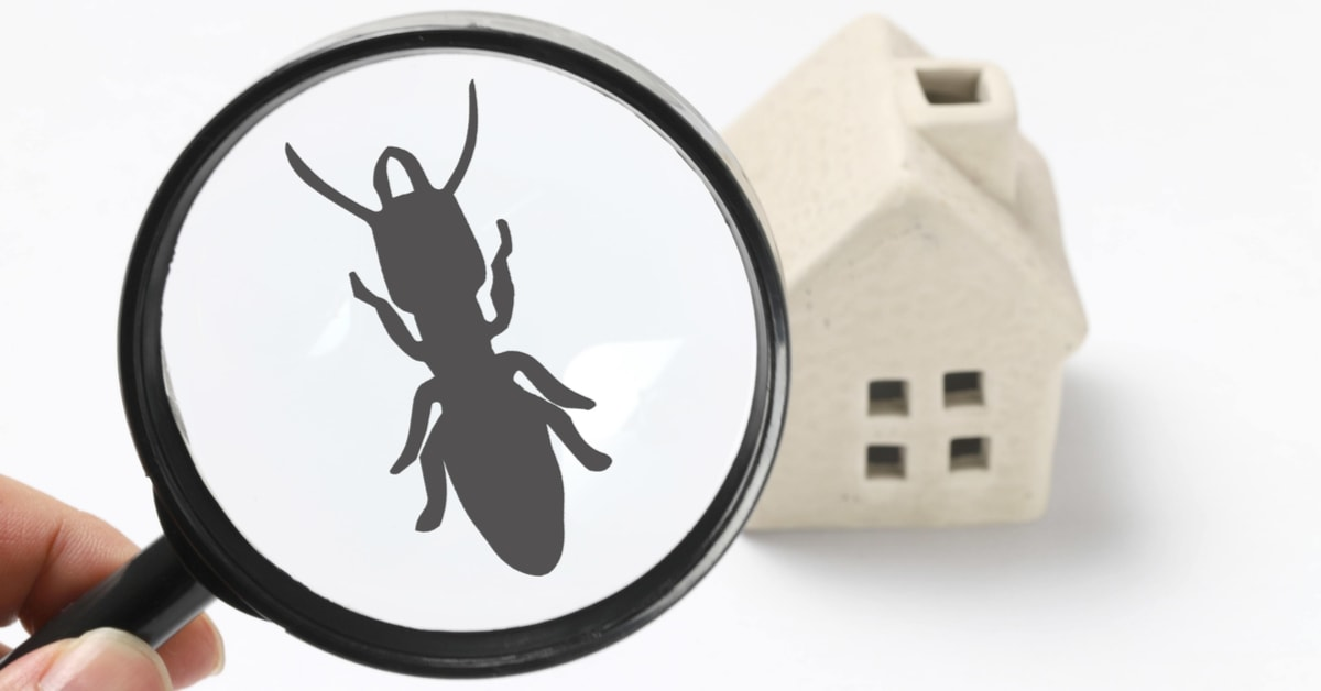 Termites: How You Know Your Home Has Them