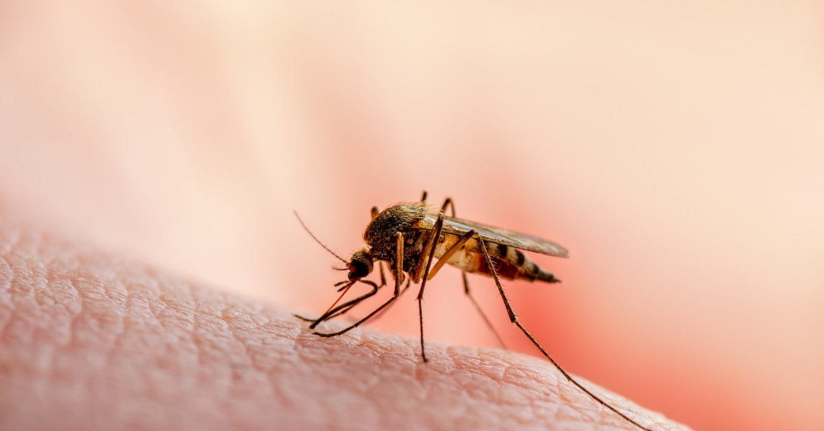 The Signs of Mosquito Breeding Grounds