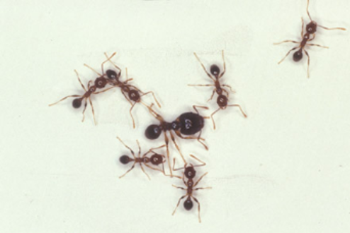 How Are Ants Getting in the House? | Hulett