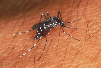 Mosquito control services are essential in Florida