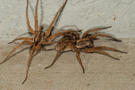 Photograph of wolf spider number 3