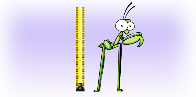 Longest Insect