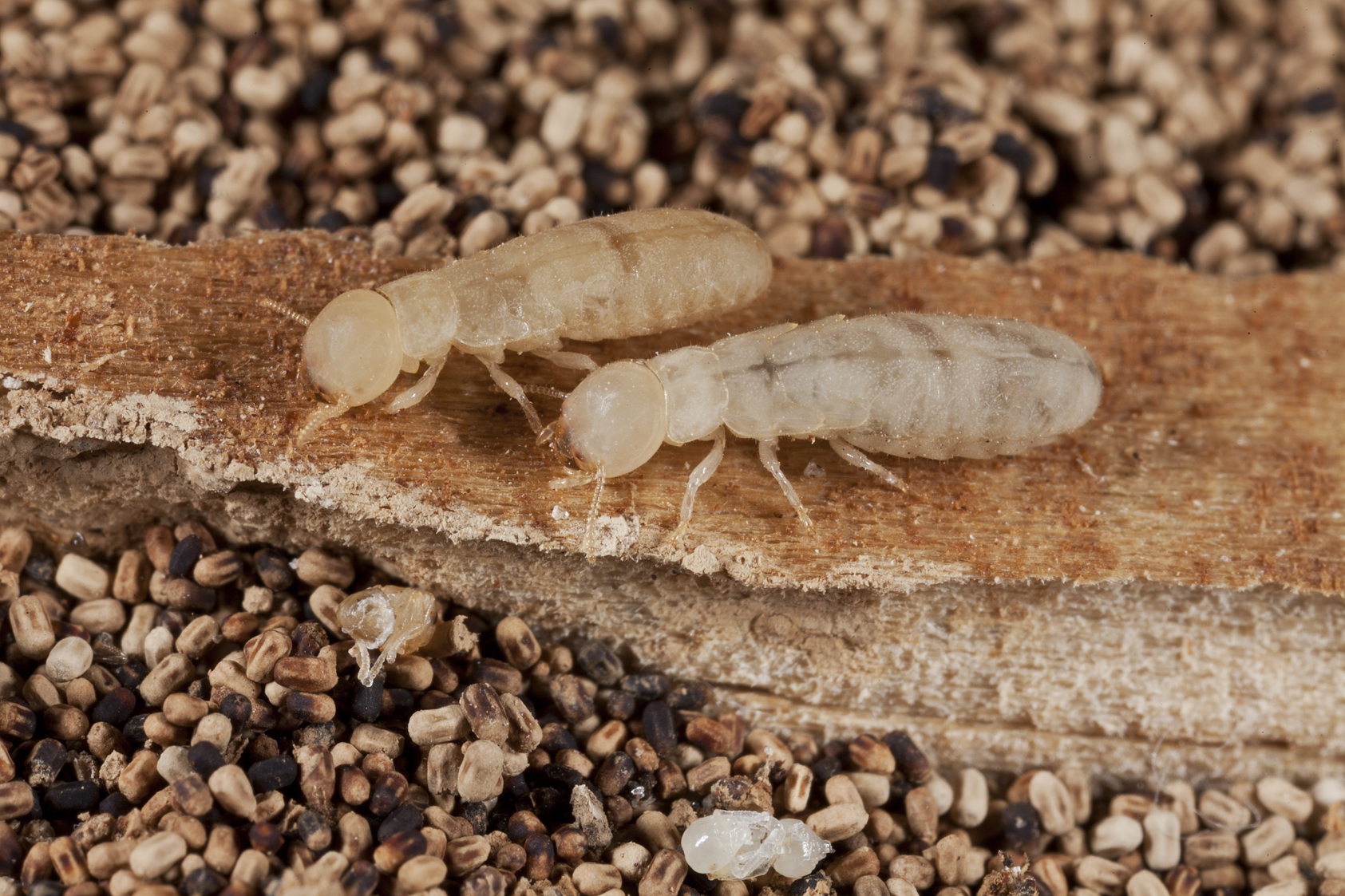 How Much Does A Termite Treatment Cost Find Out