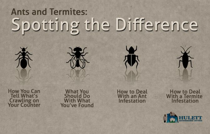 Spotting the difference between ants and termites