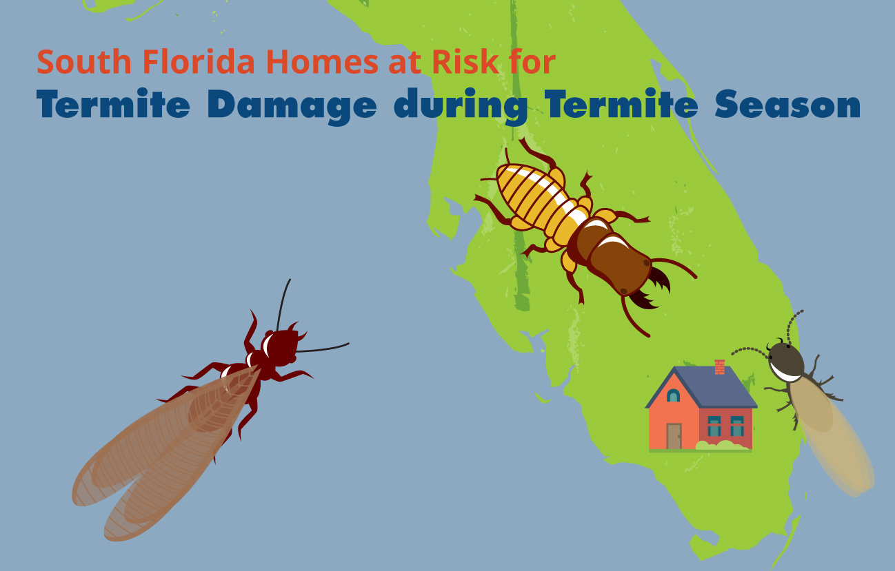 South Florida Homes at Risk for Termite Damage during Termite Season