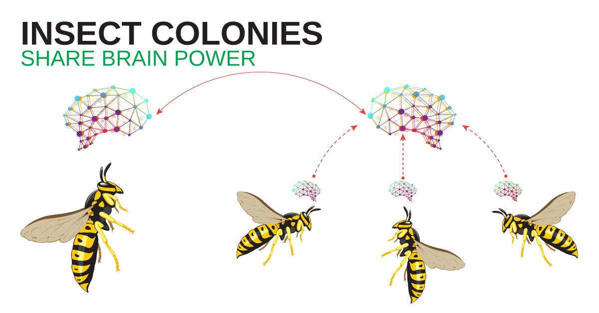 Insect Colonies Share Brain Power