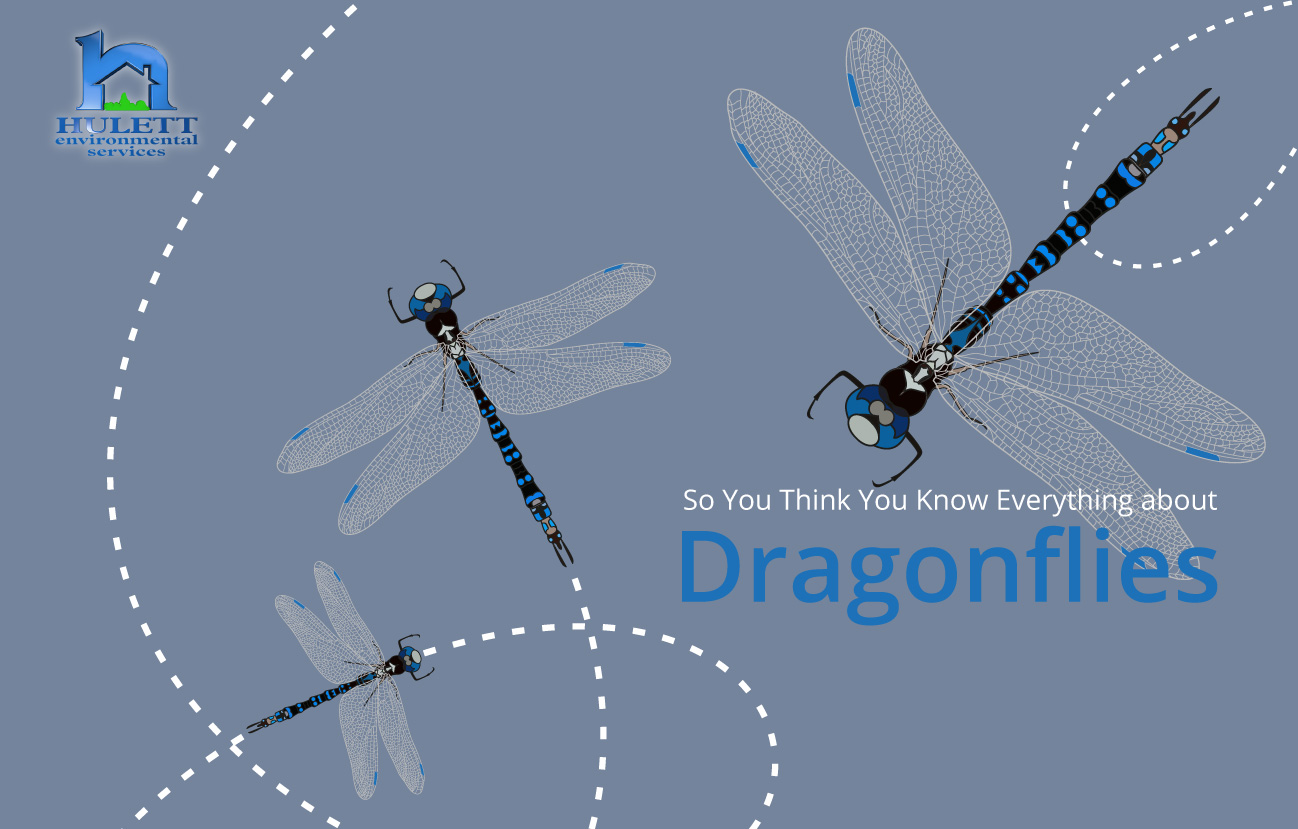 So You Think You Know Everything About Dragonflies