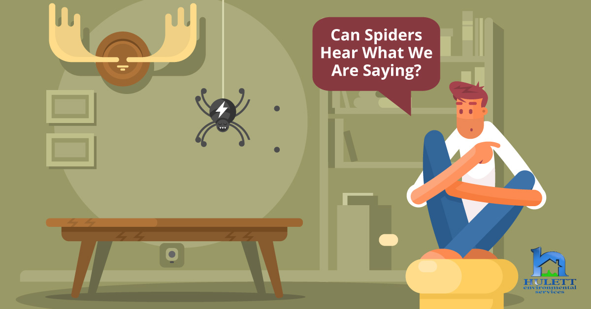 Can Spiders Hear What We Are Saying?