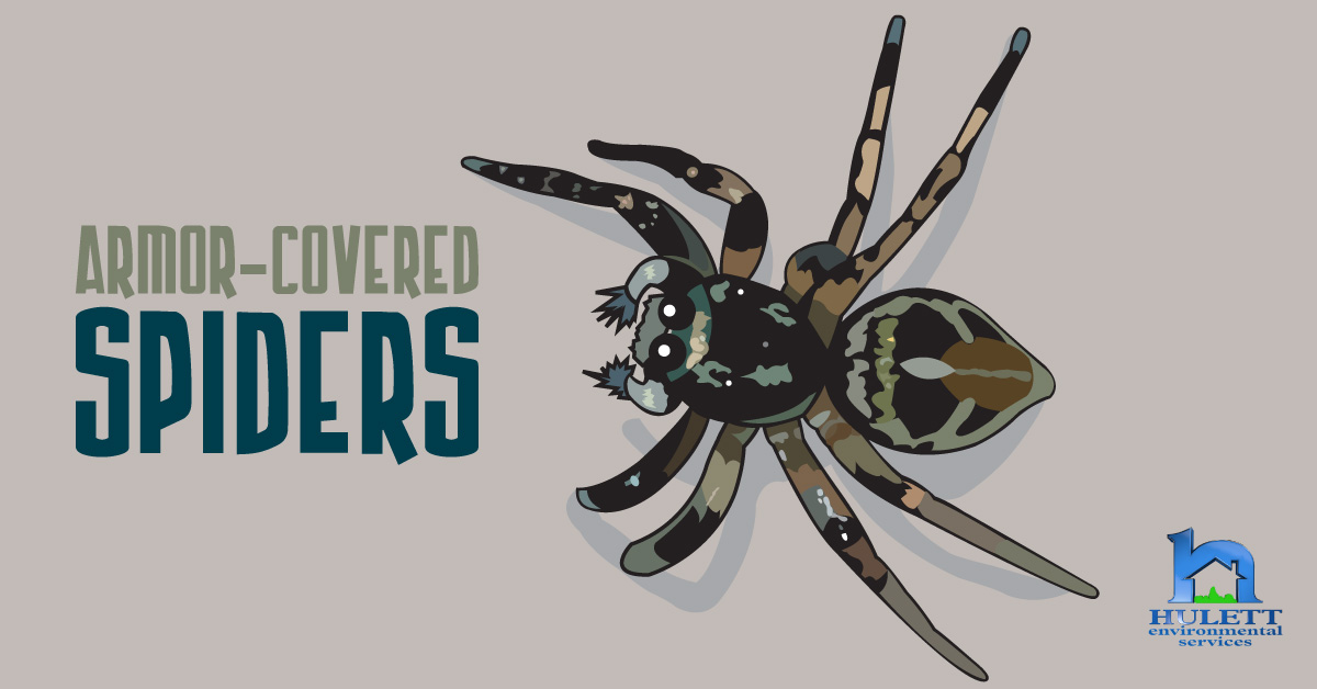 Armor-Covered Spiders