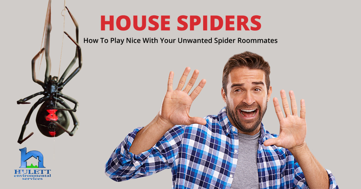 House Spiders - How To Play Nice With Your Unwanted Spider Roommates