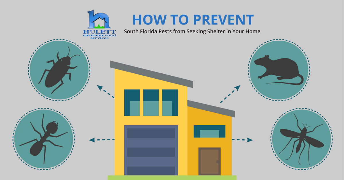 How to Prevent South Florida Pests from Seeking Shelter in Your Home
