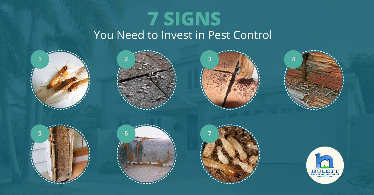 7 Signs You Need to Invest in Pest Control