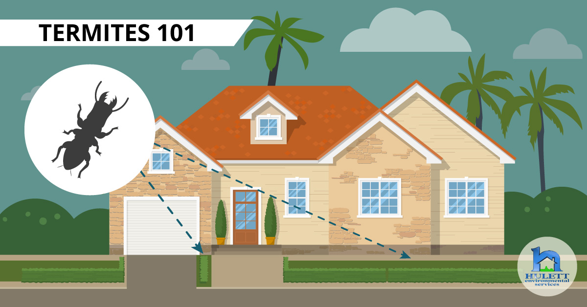 Termites 101: A South Florida Homeowners Guide
