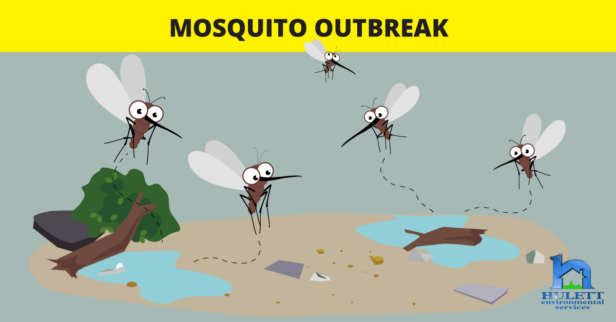 Mosquito Outbreak in South Florida Following Hurricane Irma