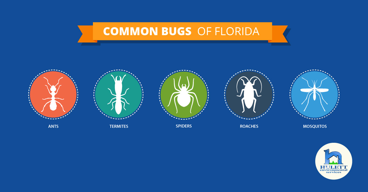 Name this Native Floridian: Common Bugs of Florida and What You Need to Know About Them