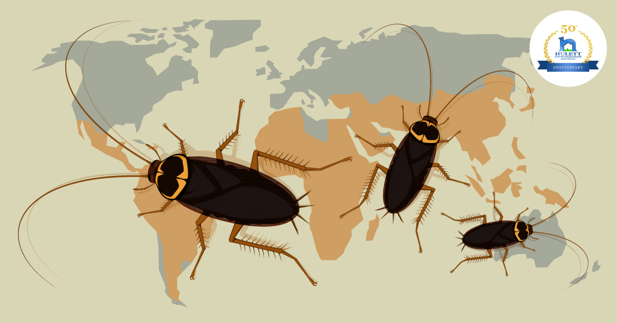 Cockroaches: What You Need to Know but Didn't Want to Ask
