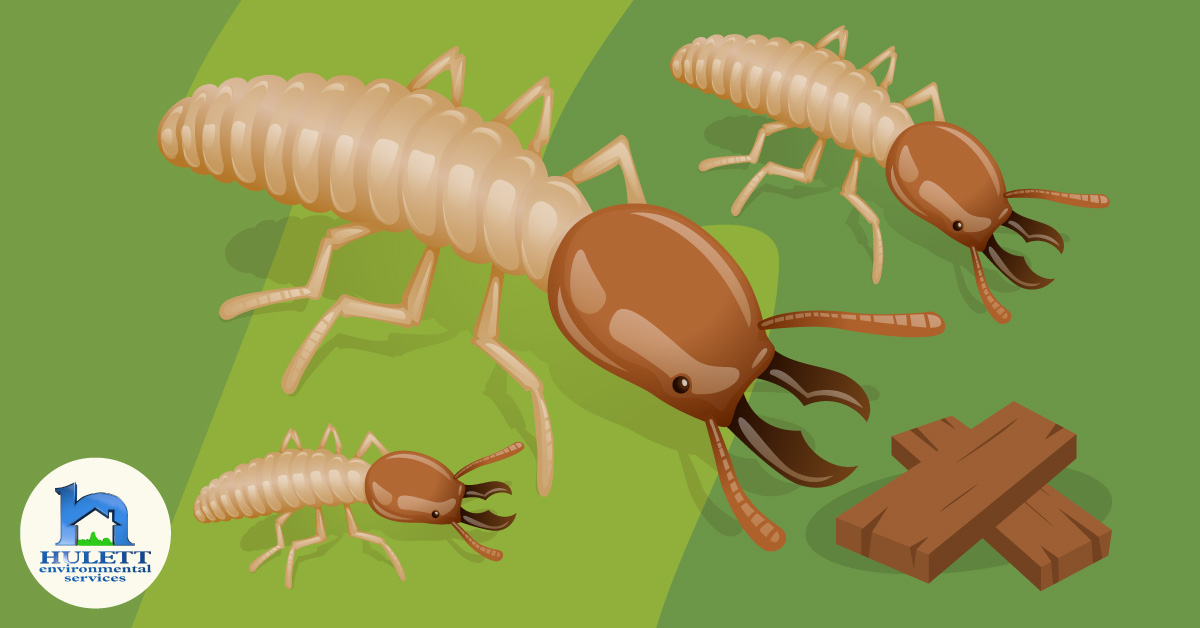 Termite Awareness: How Much Do You Know About Termites?