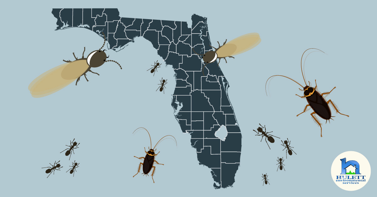 Why Pests Love Florida