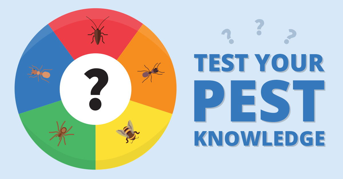 Test Your Pest Knowledge